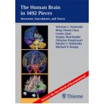 Human Brain in 1492 Pieces: Structure, Vasculature, and Tracts