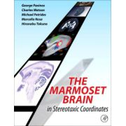 Marmoset Brain in Stereotaxic Coordinates