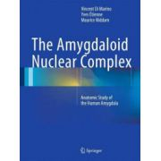 Amygdaloid Nuclear Complex: Anatomic Study of the Human Amygdala