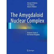 Amygdaloid Nuclear Complex: Anatomic Study of the Human Amygdala